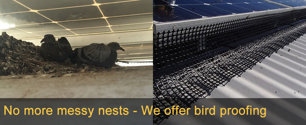 Bird Proofing Solar Panel Bird Proofing Services Pure
