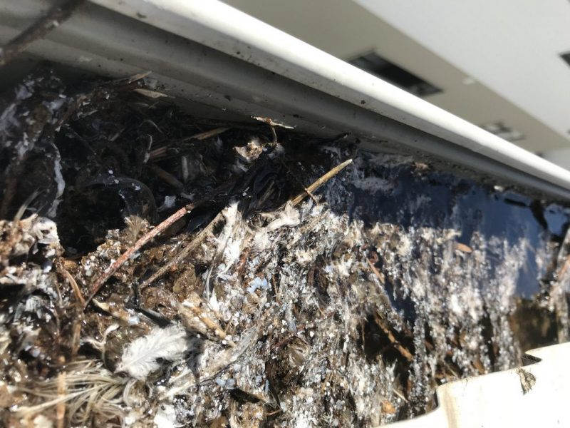 gutter cleaning brisbane