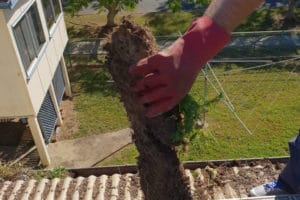 Tree roots growing in gutters_rs